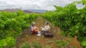 zęby : senior man and woman playing in vineyard with ukulele music Wideo