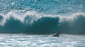 gąbka : Waves and surfer enjoy the good weather in Tenerife