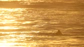 Gold tones on a surfer waiting for waves