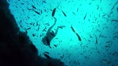 snapper : diver surrounded by a group of fish