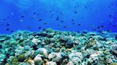 Underwater scene. Coral reef colorful fish groups and sunny sky shining through clean ocean water.