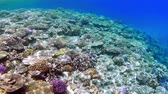 4 K footageunderwaterscape Coral reef and colorful fish groups and sunny sky shining through clean ocean water. Dostupné videozáznamy