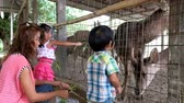 Asian boy and girl with their mother are feeding animal in the zoo. Стоковые видеозаписи