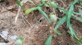 black ants marching around ants nest