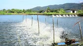 water treatment equipment,Water turbines on Shrimp ponds