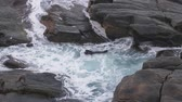 kovalamak : Seals at the coastal landscape of the Flinders Chase National Park Stok Video