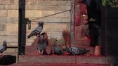 pobre : Pigeons eating leftover from a Temple statue in Kathmandu