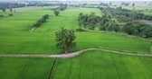 movimentar se : Aerial view Drones fly around the big trees and along footpath beside two paddy fields rural scene Thailand.