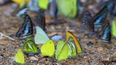 Beautiful Butterfly on ground in a forest