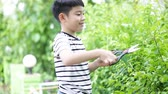 cut off : Asian boy cut off green leaf tree in the garden .
