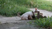 funny cat : 2 cute kittens are playing together with fun