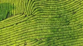 road top view : Drone Shot of top view on green tea plantation