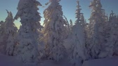 snowboard : Trees in snow on the mountainside