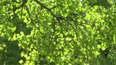 radial : Sun on green leaves