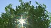 radial : Sun through windy trees Stock Footage