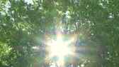 windy : Sun through windy trees Stock Footage