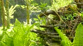 wood : Fern and snag, roots in wood. Slider shot