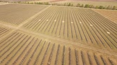 hotbed : 4K Aerial. Field in agriculture with equal beds in spring