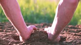 amarrotar : Hand of man farmer and arable land, dirt. Close up. Protect nature Stock Footage