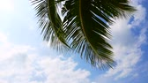 Coconut palm trees are moving on the wind on the sky background Stock Footage
