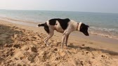 abrigo : Cute dog on the beach walkes away