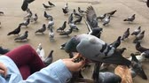 Hungry pigeons sitting on womans hand and eating sunflower seeds