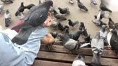 Hungry pigeons sitting on womans hand and waiting for a food