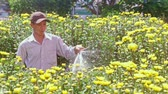 brilho : NHA TRANG, KHANH HOA  VIETNAM - JANUARY 26, 2017: Vietnamese man waters yellow chrysanthemum flowers with hose on garden plantation at sunlight before new year TET on January 26 in Nha Trang