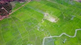 верхний : upper view large rice plantation with small river