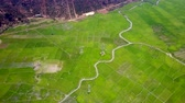 grafikonok : aerial view long river curves across large rice plantation Stock mozgókép