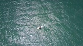 surfe : surfer small figure sails on rippling ocean waves Stock Footage