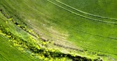 farklı : upper view tractor traces on green field