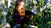 шелуха : woman with loose flowing hair tears off corncob on field