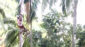 csikk : man sits on support cuts palm tree top with machete Stock mozgókép