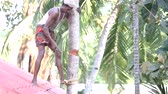 indian man stands on house roof and chops down palm tree Vídeos