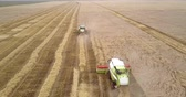 harvesting machines drive gathering wheat along field Vídeos