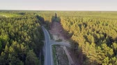 tyumen : bird eye view cut down area in pine forest crossed by road