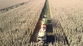 tyumen : upper view harvester cuts clearing drives to field end Stock Footage