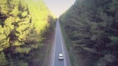 sun rays light pine trees and car drives along road 動画素材