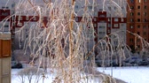 fantastic picture wind waves thin birch branches covered with hoarfrost against dwelling house on sunny day in city 動画素材