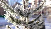 덮개 : amazing picture pine tree branches covered with hoarfrost on frosty winter day in city park 무비클립