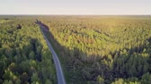 contínuo : tremendous high aerial view modern long empty asphalt road cuts through huge pine forest at sunset