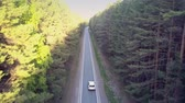 wonderful aerial motion over auto driving along highway across deep wild pine forest against blue sky