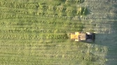 çukur : vertical view powerful special silage ramming bulldozer leaves corn silage heap in pit on sunny autumn day