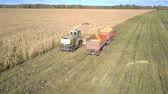 fodder : close upper view modern ensilage harvester gathers corn foliage as green fodder for cattle into red trailer in field Stock Footage