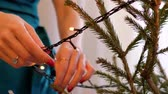 anel : slow motion closeup girl hands with red manicure and gold ring put garland on christmas fir tree at home