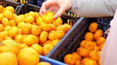 supermercado : slow motion close view girl hand chooses fresh aromatic tangerines and put into plastic bag against boxes of fruits