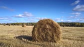 그물 : large dry wheat straw round bale lies on gold harvested stubble field against boundless blue sky with clouds 무비클립