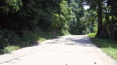 도로 표지판 : wonderful jungle road with green tree shadows near red white and green road signs on tropical day