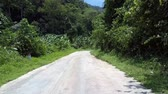 дорожный знак : wonderful jungle road with green trees and road signs against forestry hills lit by summer sun Стоковые видеозаписи